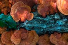 Orange Fungus Growing On The Trunk Of A Fallen Tree