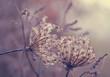 Kwiaty, krople rosy, poranek
