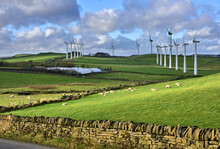 Royd Moor Windfarm View With Sheep