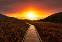 Wooden Walking Path On One Mile Lake With Flowers. Picture Taken In Pemberton, British Columbia, Canada. Dramatic Sunrise Sky Art Render.