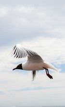 Selective Focus Shot Of A Seagull In Flight
