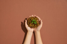 Woman's Hands Holding Small Plant