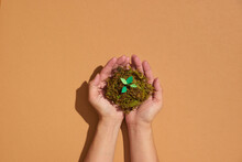 Human Hands Holding Small Plant, New Life Concept