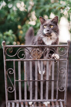 Grey And White Cat Outside