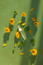 A Bottle Of Common Tansy Essential Oil With Fresh Blooming Chrysanthemum