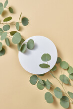 Round Paper Card Decorated Fresh Twig Of Natural Eucalyptus Plant.