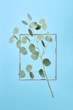 Eucalyptus Branch Is Flying In Metal Frame.