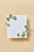 Congratulation Card Decorative Organic Evergreen Eucalyptus Plant.