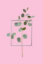 Eucalyptus Twig In A Metal Frame.
