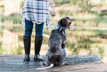 German Short Haired Pointer Next To Owner