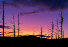 Dry Trees In Dead Forest On The Background Of Colored Sunset Sky.