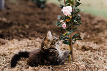 Kitten Plays With Flowering Plant