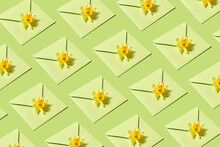 Envelopes Pattern With Narcissus Flowers.