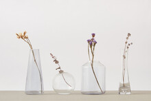 Dry Flower Twigs In A Glass Vases.