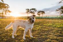 Scruffy Dog At Sunset