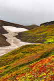 Scenery with colorful plant area at the foot of Mutnovsky volcano, Kamchatka, Russia.