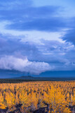 Evening cloudy sky above dead forest with restored area in Kamchatka.