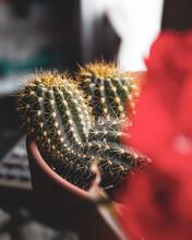 Cactus In Bakery