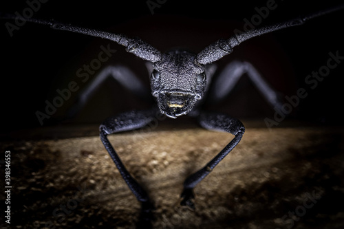 Macro shot of a black spider on a wooden surface Fototapeta