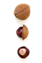 Buckeye Chestnut. Fresh Conkers Isolated On White Background With Copy Space.