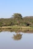 Photos taken in Pilanesberg national park, South Africa
