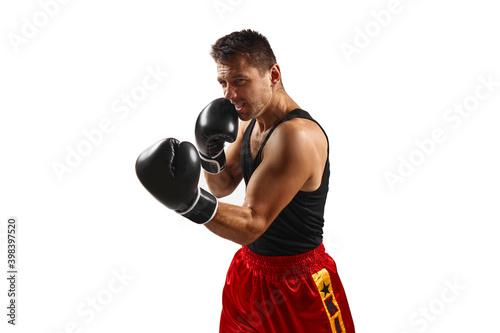 Fototapeta professional boxer man in black boxing gloves punching isolated on white background. obraz