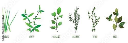 Fototapeta Herbs illustration of chives, mints, oregano, basil, thyme, rosemary