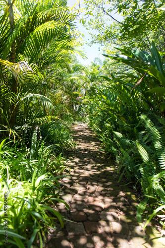 Fotografija Walking trail through the jungle