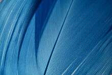 Beautiful Blue Trends Feather Pattern Texture Background. Macro Photography View..