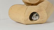 Criceto Siberiano, Animale Domestico, Che Si Nasconde Nel Suo Gioco In Legno, Per Divertimento