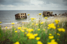 Old Stone Houses Washed Into The Sea. In The Foreground Yellow Flowers, Dandelions. It Was Once Used For Military Purposes, Defense. Latvia, Liepaja, Northern Forts