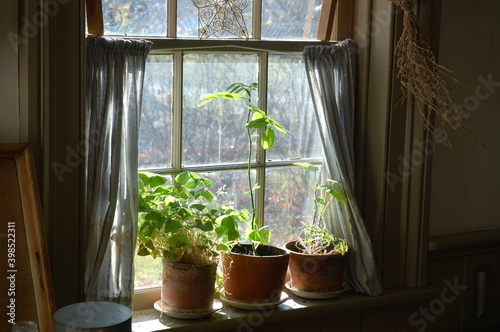 Obraz na plátne Rustic country windowsill with potted plants