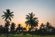 India, Karnataka, Hampi, Palm Trees Surrounding Rice Paddy At Sunset