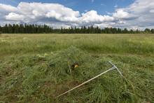 Trolley With Freshly Cut Grass. Making Hay.