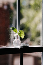Plant Lifestyle Home Decor
