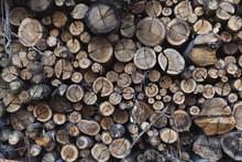 Stacking Of Freshly Cut Wood Logs
