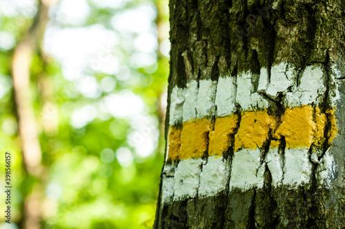 Fototapeta Oznaczenie szlaku turystycznego namalowane na korze drzewa obraz