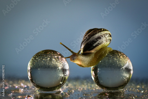 Stampa su Tela Closeup shot of a snail on crystal balls on a glass surface