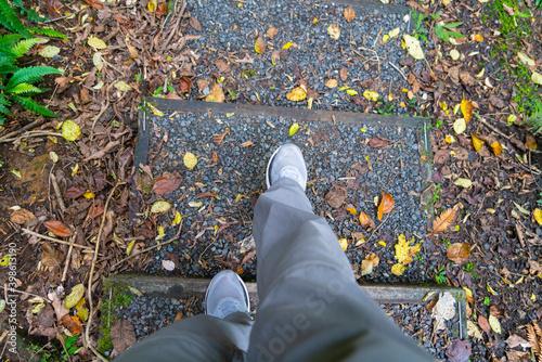 Fotografie, Obraz Primeval forest walk from Golden Bay on Stewart Island