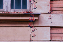 Berry Branches Growing Near The Details Of A Building