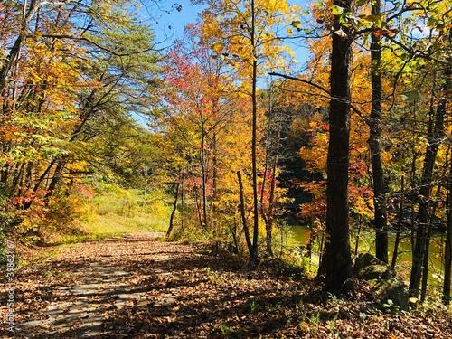 Nature,autumn wood, © Irina