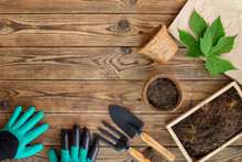 Gardening Tools, Digging Gloves, Coconut Fiber Pots And Soil On Wooden Table. Cultivation And Caring For Indoor Potted Plants. Replanting The Plant Into The Pot.