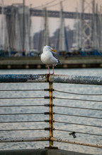 Sea Gull Perched On Pier Railing