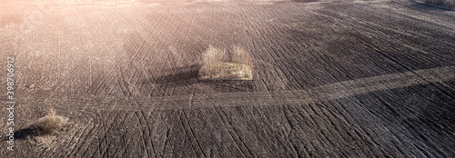 Stampa su Tela Soil plowed field with growing trees in middle