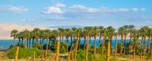 Dead Sea Landscape, Israel
