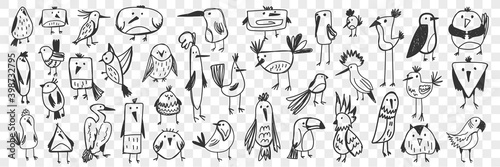 Fototapeta premium Birds doodle set. Collection of funny hand drawn various kinds of cute wild birds isolated on transparent background. Illustration of owl titmouse penguin pelican toucan parrot for kids