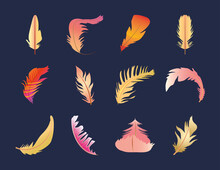 Set Of Feathers Various Motif And Shapes Decoration
