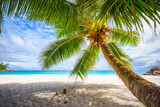 Palm tree and white sand and turquoise water at tropical beach,paradise at seychelles