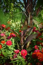Le Jardin, De Sublimes Fleurs Au Milieu De La Nature