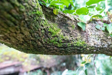 Tree Branch With Green Moss